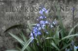 Abney Park Cemetery: 5 April 2007