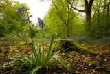Staffhurst Wood and Tatsfield: 26 April 2007