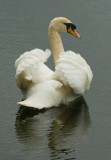 Sevenoaks Wildlife Reserve: 17 May 2007
