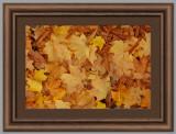 Leaves1259.jpg