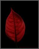 Red_1454.2.jpg