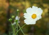 d50_flora