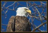 eagles_12_06