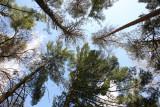 Mk2_Hinckley_trees_f11.jpg