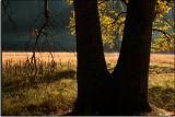 The Tree in Stoneman Meadow