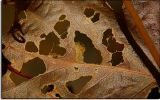 Leaf in Zion Canyon