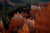 Morning Light Bounces Around the Hoodoos at Bryce Canyon