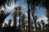 At the Furnace Creek Oasis