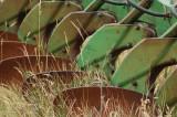 Farm Equipment, Bear Valley, Utah