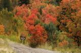 Entering Cache National Forest, Utah