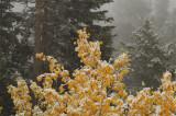 Lander Pass, Wyoming