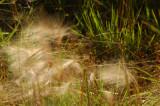 Blowing Weeds