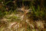 Weeds with a Fast Shutter Speed