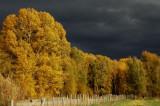Fall Creek Road and Fall Colors