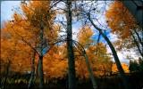 Aspen Grove, the Tetons
