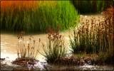 Plant Life Near the Mud Volcanos