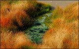 Grass and Water Near the Mud Volcanos