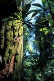 Yuen Tsuen Ancient Trail - ¤¸¯þ¥j¹D