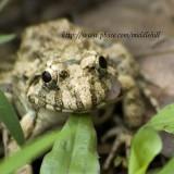 Frog - 077