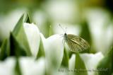 Butterfly - 027