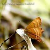 Butterfly - 098