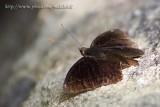 Moth - 110