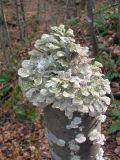 Fungi capped tree