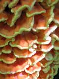 Chicken Mushroom