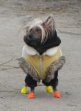 5th   Cold Doggie
