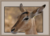 Impala & some Photoshop fun (0436)