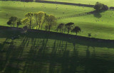 Evening Light From Belstone Common