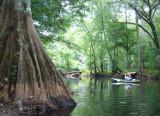 Kayaking - Hillsborough River