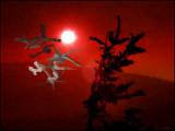moonlight fire, sept. 3-12, 2007