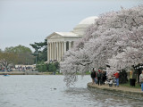 Washington DC, Cherry Blossom Festival 2007