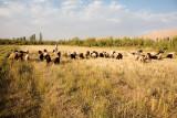 Nomadic life - Aghdash
