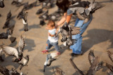 Child and helper among pigeons