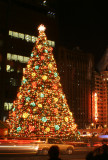 Official City Tree