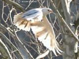 Tennessee Birds