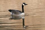 goose 120