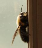 Letzzz Bee Friendzzzz