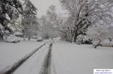 SnowNov06-019.jpg
