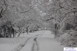 Snow November 27 - 29, 2006