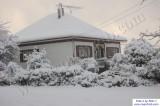 SnowNov06-023.jpg