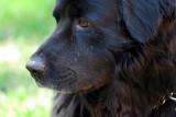 Riley 200-400VR.jpg