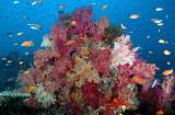 Rainbow Reef, Taveuni March 07
