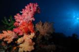Soft Corals, sun burst