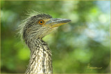 BIG BIRDS 2007