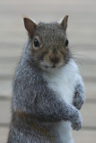 December 11, 2006Squirrel