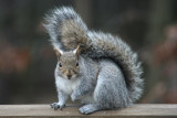 January 5, 2007Squirrel