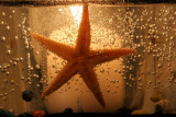 January 9, 2007Candlelit Starfish